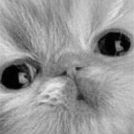Дарья Денисенко